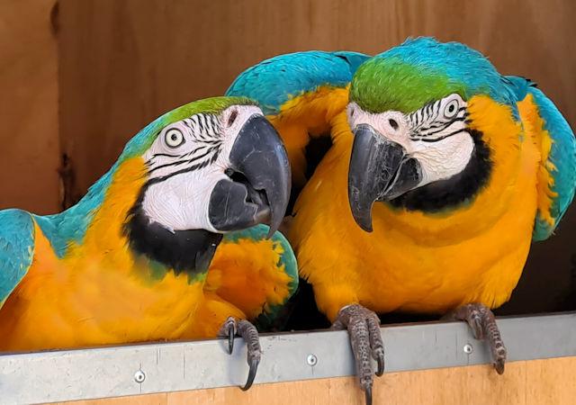 Macaws The Bird Place