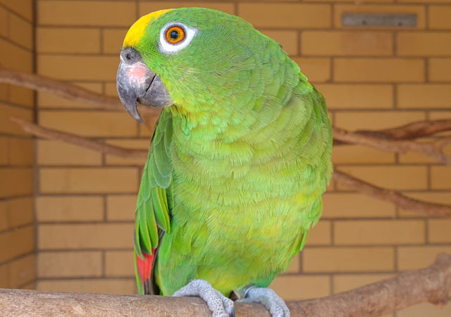 The Bird Place parrot